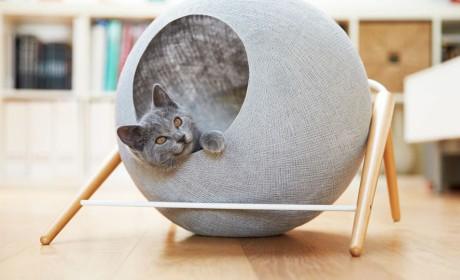 这群爱给猫盖房子的设计师又来了,今年有什么不同?