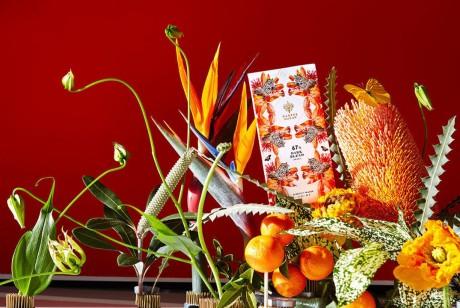 巴西热带雨林风情Harper Macaw巧克力包装设计