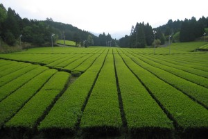 浅析农产品包装设计方法