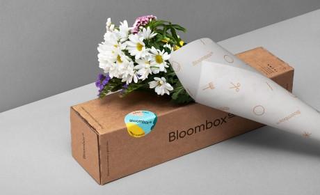 Bloombox花卉店插画风格品牌视觉设计
