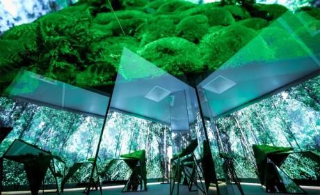 能这么完美诠释环保再生技术的展览,应该就是Sisley的这个迷人多彩的植萃世界了!