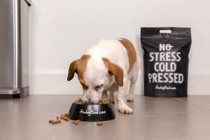 dogfood.com狗粮品牌包装设计方案,精准狙击目标消费者